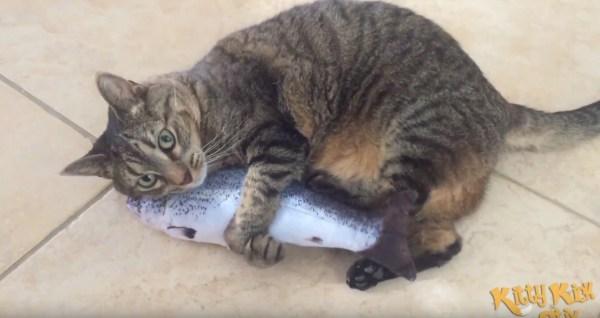 180828cat 600x318 - 我が物と猫は離さぬ生魚、にしか見えない抱き枕