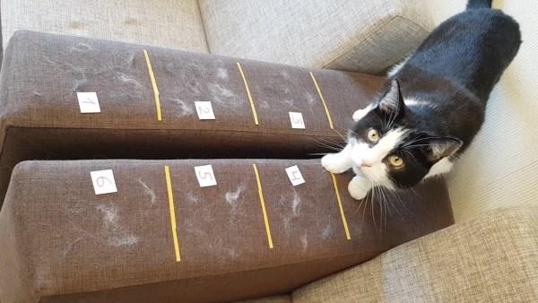 180912cattest 600x338 - 6つのうちのどれがベストか、ソファについた猫毛除去アイテム選手権