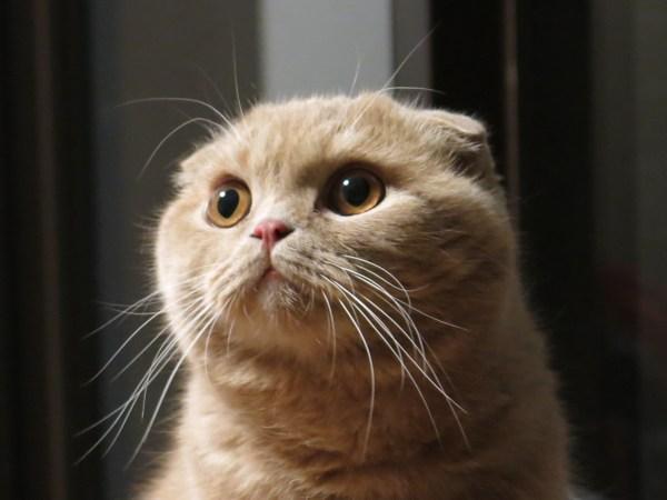 181005cat02 600x450 - 本日の美人猫vol.287