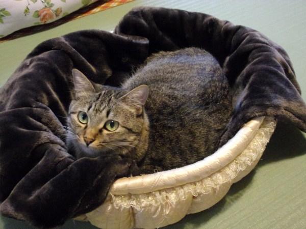 181031torokerucat01 600x450 - 猫もとろける「とろけるシリーズ」サンプリング、全国18店舗の保護猫カフェで本日から