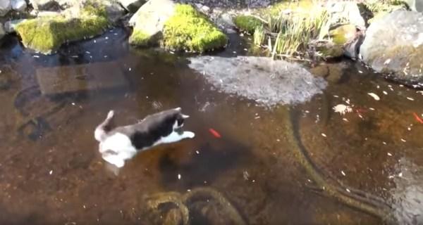 181128cat 600x320 - 氷上を華麗に踊る白黒子猫、氷の下のお魚追って