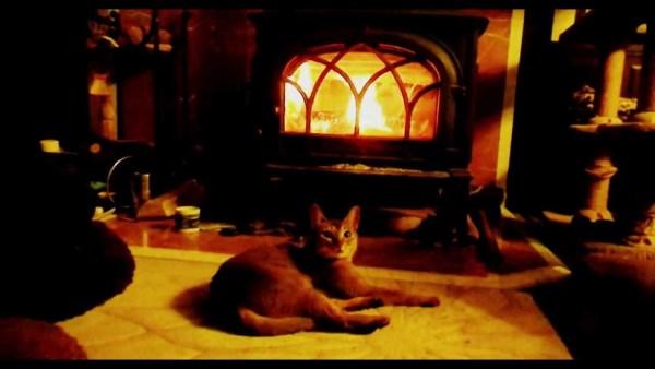 181226cat 600x338 - 赤々と暖炉の炎に照らされる猫、火力の強さに心配な顔
