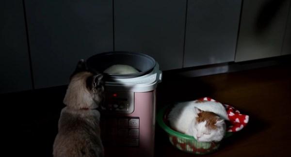 181227cat02 600x324 - 餅つき機の横で丸まる猫の寝姿、つかれる餅と完全に一致