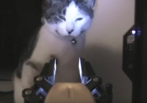 190128cat 600x420 - ロボットに照らされ睨まれ絡まれた猫、キャットパンチでワンパンKO