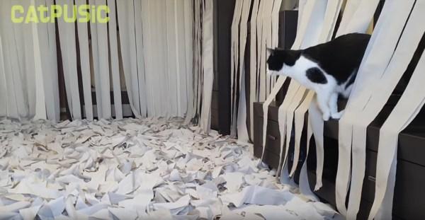 190424cat 600x311 - あの紙で部屋を満たせば猫はどうなる、欣喜雀躍大ハッスル