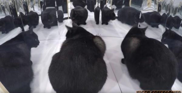 190503cat 600x309 - 猫専用の鏡の迷路、アラフォーの心をなぜかくすぐる