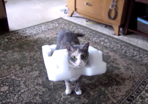 190506cat 600x422 - 発泡ポリエチレンの鎧をまとう猫、足取り軽くご満悦