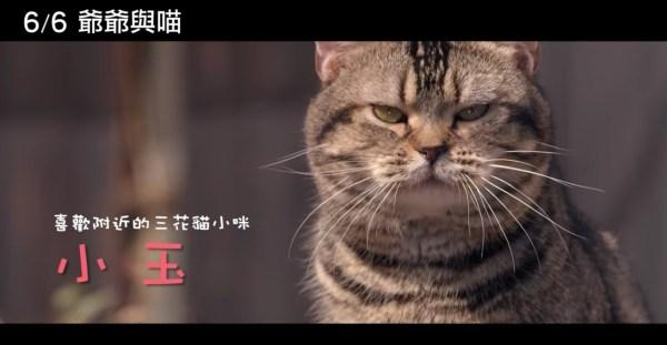 190526cat 600x311 - 映画『ねことじいちゃん』が台湾で上映、繁体字の題名は『爺爺與喵』