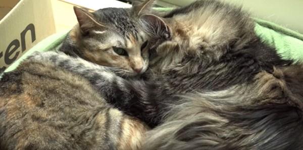 190710cat02 600x297 - 独り寝も添い寝もゴロ寝も駕籠寝でも、見てると眠たく猫の寝姿