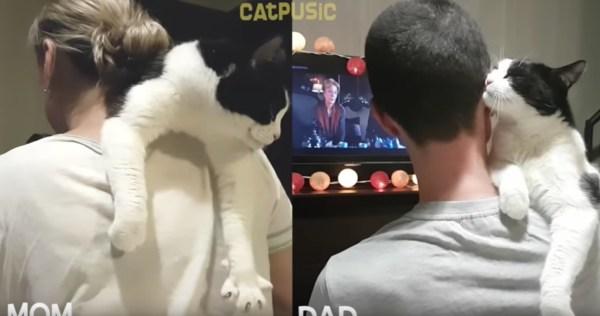 抱かれた猫のパパとママへの仕草の差、視聴者コメント明弁続出