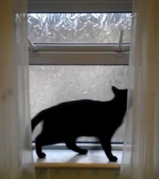 190903cat 535x600 - 滑り出し窓のロックを2つとも、外して開けて猫は逃亡