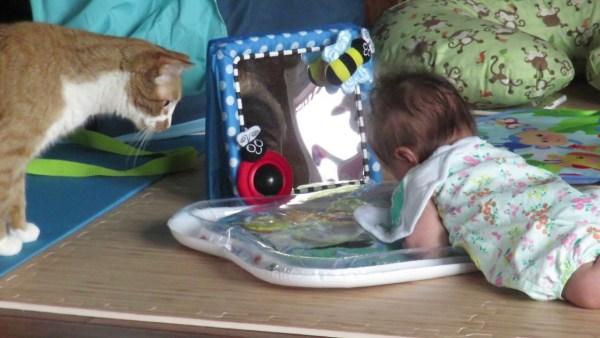 190903cat02 600x338 - ウオーターマットで遊ぶ赤子を心配する猫、無事を確認して退散