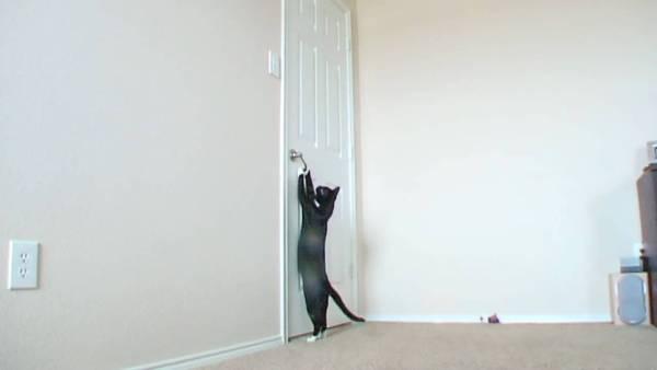 脚伸ばし腕を伸ばしてドア開ける猫、ドアの向こうのリクエストに応えて