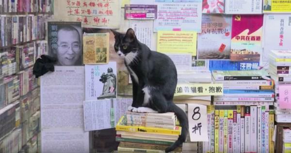 190916cat 600x316 - お客より猫の数のが多い本屋、猫目的での来店は不可