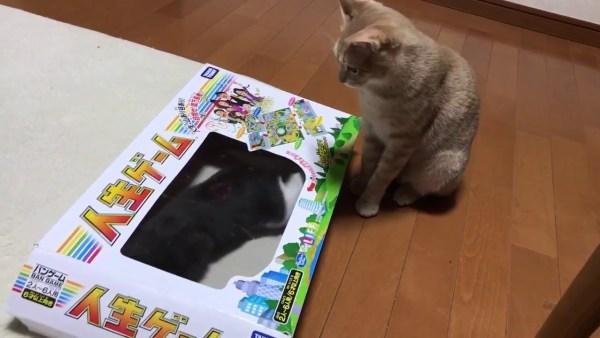 191005cat 600x338 - 人生の枠をはみ出し遊ぶ猫、自由な生き方見せつける