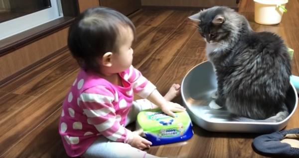 200309cat 600x317 - 猫用のタライを巡る平和な争い、赤子と猫で譲り譲られ