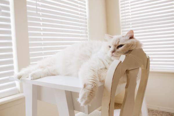 200703cat 600x400 - 本日の美人猫vol.377