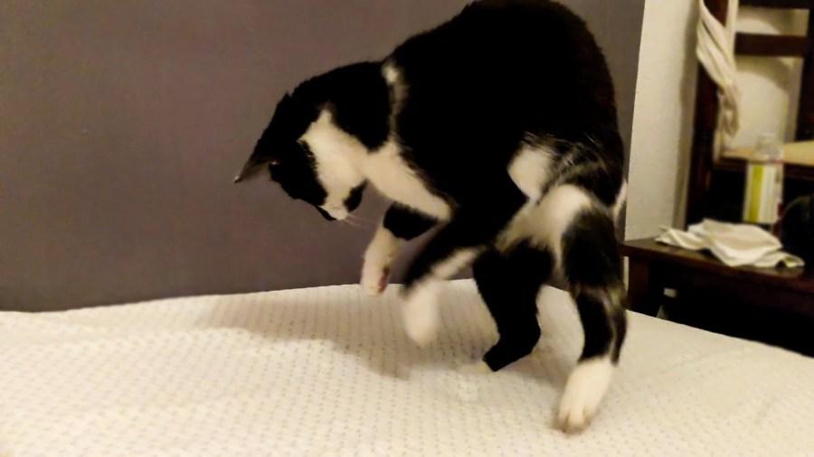 足跡の凹みが膨らむ低反発、猫は遊ぶよ永久機関で
