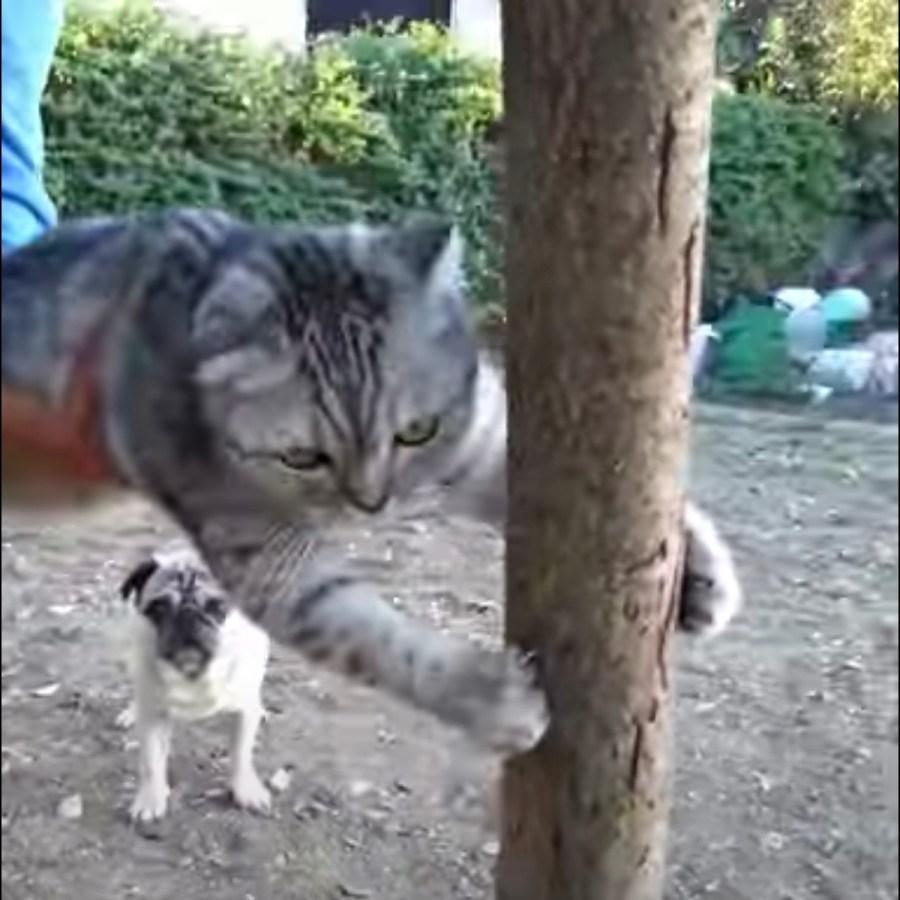 ご帰宅を要請された頑固な猫、木に爪立てて断固拒否