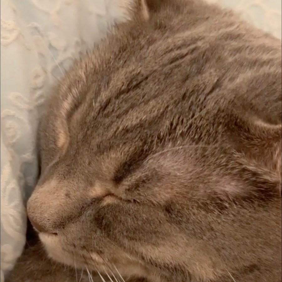 手の形も寝顔も猫はかわいく愛しく、鼻はヒクヒクイビキは野太く