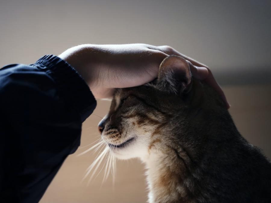 本日の美人猫vol.407