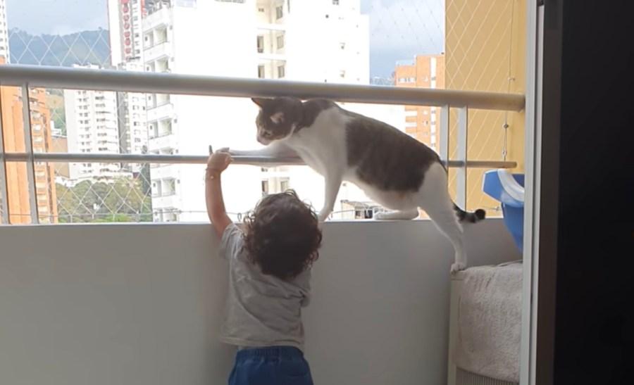 210605cat 1024x622 - 窓際で子どもを見守る賢き猫、手すりに掴まる手を解かせる