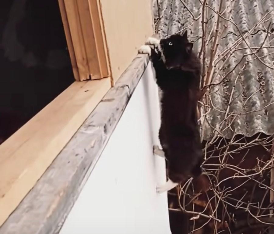 210704cat 1024x877 - 2階の壁をムーンウオークで横歩きする猫、小枝を伝って壁に飛びつき