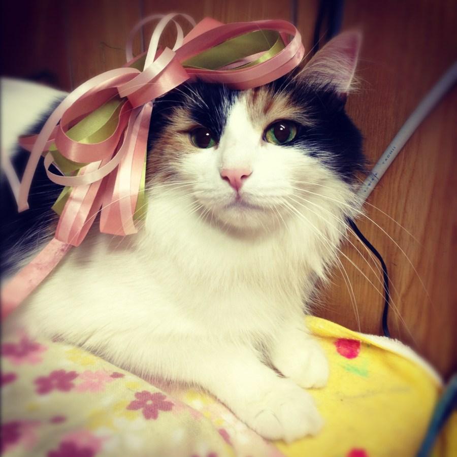 本日の美人猫vol.436