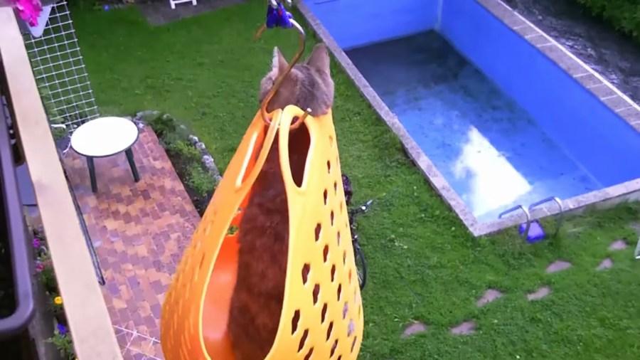 お手製の洗濯カゴの猫エレベーター、2階のベランダからお庭へ