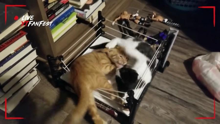 大乱闘プロレスリングで猫2匹、組んずほぐれつパンチを乱打