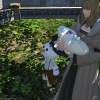 【FF14】3.5で「昼メロのイシュガルド」が完結! 菜園で野菜も子供も真心こめて育成