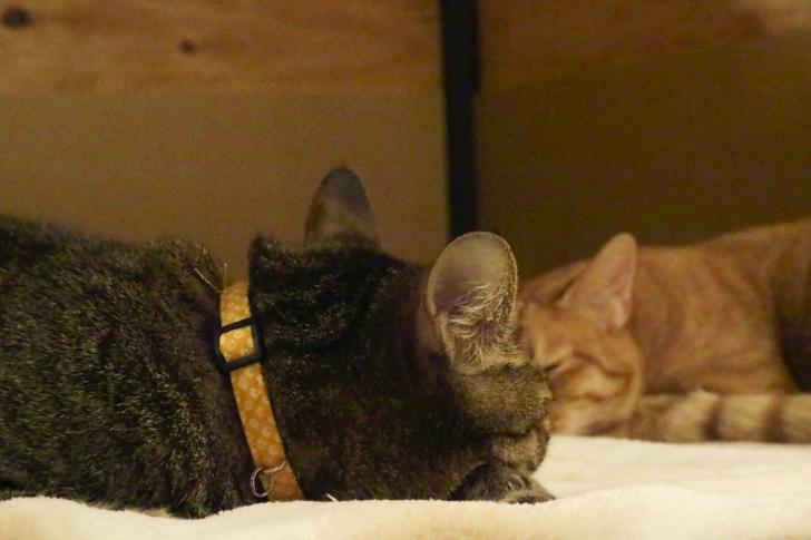 眠る猫2匹