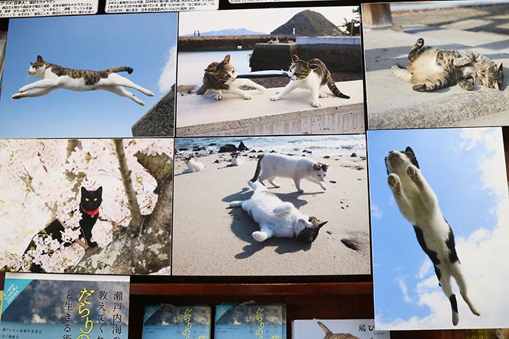 五十嵐健太さんの猫写真展示
