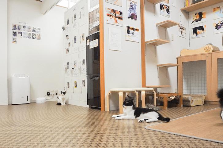 店内に二匹の黒白猫