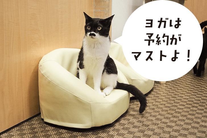 ネコに吹き出し「予約がマスト」
