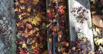 千本鳥居の紅葉