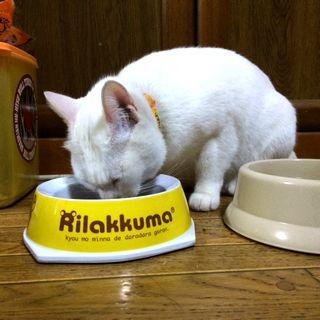 病気じゃないのに!猫が餌を吐く5つの原因と対策