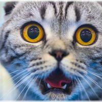 【鳴き声の種類】猫が短くクルクルと鳴く意味は何なの?