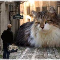 もはや犬?!大型の猫を飼いたい人にオススメの5つの品種