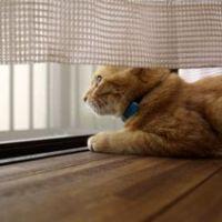 猫が寒いのを嫌がるのでクーラーの適温について調べてみた