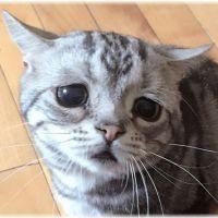 【鳴き声が切実】見逃すな!猫のストレス症状5つのサイン