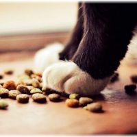 【ストレス】猫が食欲があるのに痩せる3つの原因【病気】