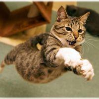 【唸る走る】病気?猫が唸ったり走りまわる3つの原因