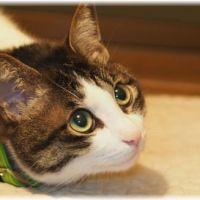 【毎年】猫の予防接種の回数と費用について調べてみた【必要?】