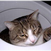 【血尿】猫の膀胱炎が治らない3つの原因【頻尿】