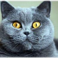 初心者でも飼いやすい猫10種類をピックアップ!