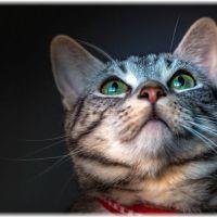 【自己責任】冬に猫を1週間留守番させる方法【暖房】