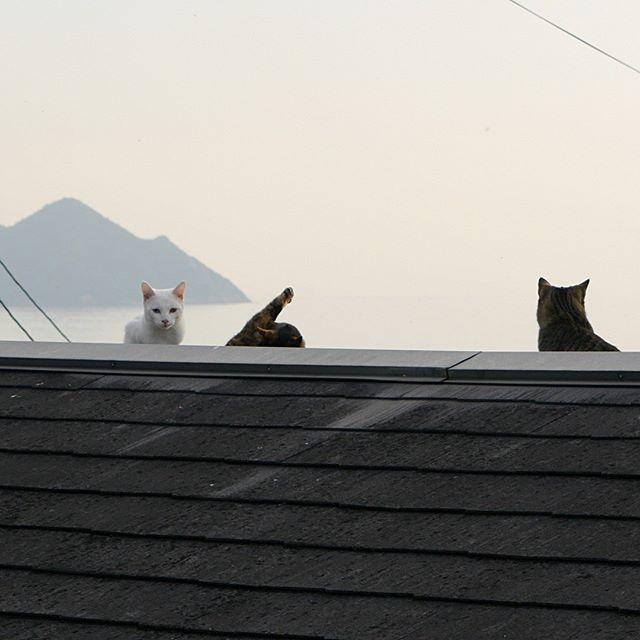 一人シンクロしてるよ。サビちびちゃんだ。 #こねこ部 #ねこ部 #ニャンスタグラム #にゃんすたぐらむ #ねこ #こねこ #にゃんこ #しまねこ #キジトラ #白猫 #サビ猫 #cat #kitty #catstagram #petstagram #instacat #meow #catoftheday #ilovemycat #catlove #catlover