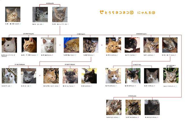 にゃん系図(うちのネコの家系図)が完成したよ。大きな画像なのでインスタだと解像度が悪いので、詳細をご覧になりたい方はウェブサイトへどうぞ!http://nekonekodan.com/nyankeizu/ (コピペしてね!) #こねこ部 #こねこ #kitty #ねこ部 #ニャンスタグラム #にゃんすたぐらむ #ねこ #ネコ #ネコ部  #ネコ好き  #ネコスタグラム  #ネコのいる生活 #にゃんこ #しまねこ #黒猫 #キジトラ #三毛猫 #茶トラ #白猫 #サビ猫 #cat #catstagram #petstagram #instacat #meow #catoftheday #ilovemycat #catlove #catlover99999 #고양이
