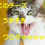 猫がチーズ好きで困ってます!!癒しの中に隠れた危険な罠
